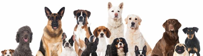 WORKING DOG REGISTRY